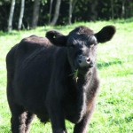 COWS - 8-30-11 to 9-12-11 196